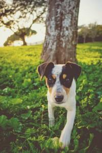 Der erste Hund zieht ein und das sollten Sie beachten