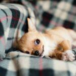 Nassfutter für den Hund – Vor- und Nachteile