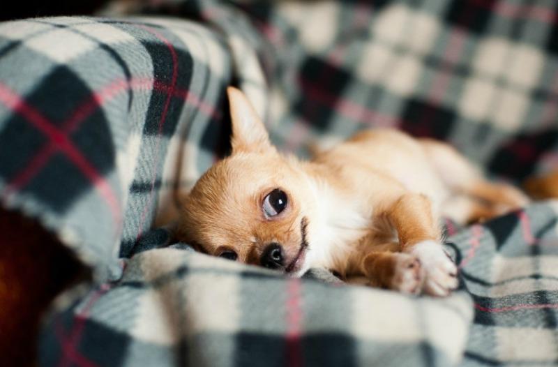 Nassfutter für Ihren Hund - die Vor- und Nachteile