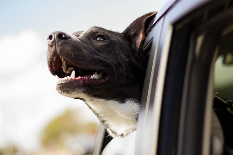 Hund unterwegs - So ist mein Hund sicher im Auto