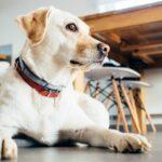 Hundehalsband – Vor- und Nachteile und welches ist das richtige?
