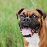 Trockenfutter für den Hund – Vorteile, Nachteile und Erfahrungen