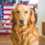 Erstausstattung erwachsener Hund – das Gesamtpaket