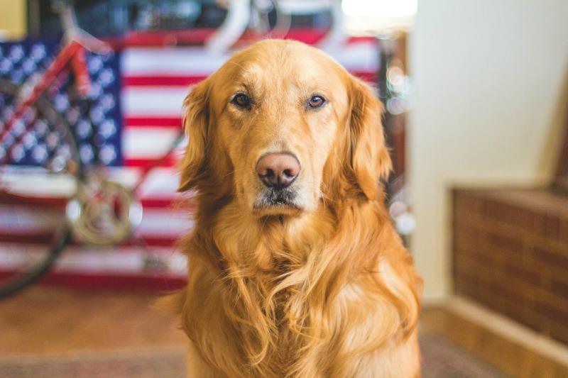 Welche Ausstattung brauche ich für meinen ersten Hund?