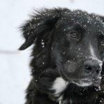 Wie kommt der Hund gut durch den Winter?