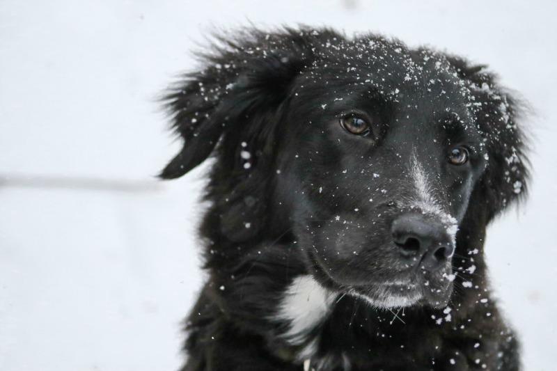 Was braucht mein Hund im Winter?