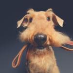 Hundeleinen – diese Arten gibt es und so werden sie eingesetzt