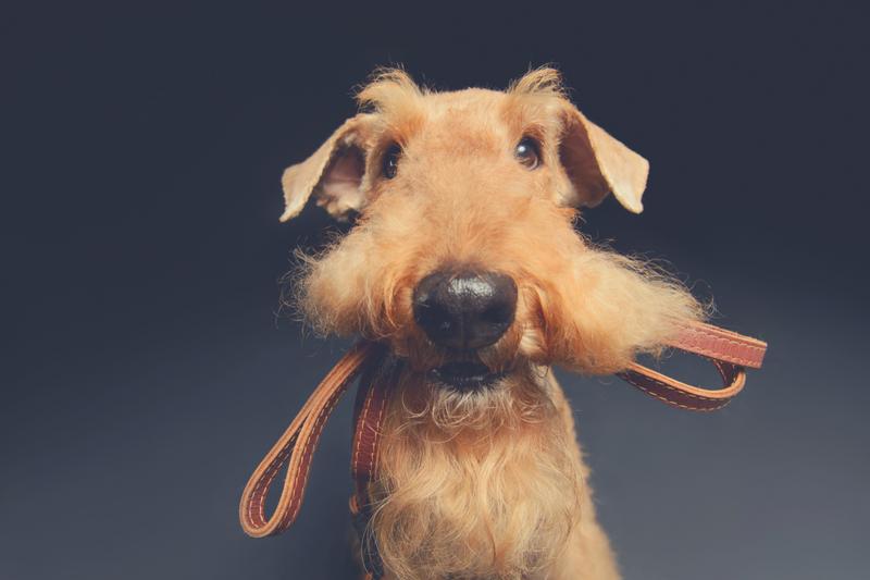 Hundeleine - diese Arten gibt es und so werden sie eingesetzt