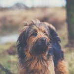 Welpe oder erwachsener Hund: was passt besser zu mir?