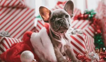 Die 13 schönsten Weihnachtsgeschenke für Deinen Hund